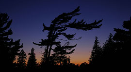 Windswept pine at Sunset, Outer Fox Islands, Georgian Bay. Photo by Sean Tamblyn.