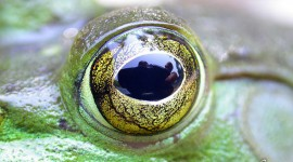 Bullfrog Eye, Massassauga Provincial Park, Georgian Bay. Photo by Sean Tamblyn.