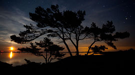 Moonrise Trees, Big McCoy Island, Georgian Bay