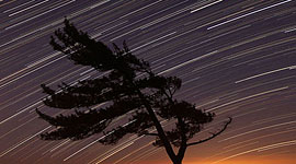 Windswept pine tree and star trails, Killbear Provincial Park, Georgian Bay
