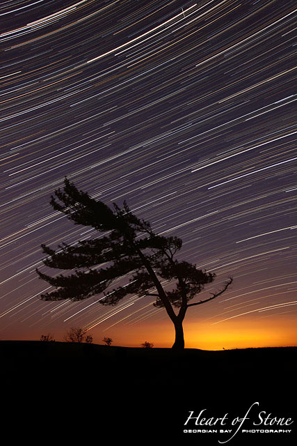Windswept pine tree and star trails, Killbear Provincial Park, Georgian Bay
