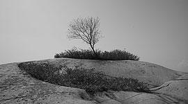 Tree topping granite island, Philip Edward Island, Georgian Bay