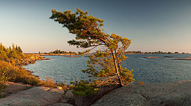 Lone pine tree, Big McCoy Island, Georgian Bay