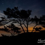 Moonrise Trees, Big McCoy Island, Georgian Bay